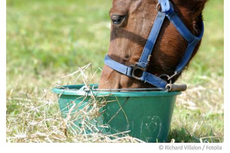 pferdeweide-pflege